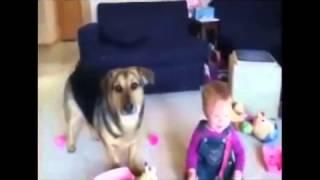 приколы: Ребенок и Собака, Дети Смеются. приколы 2017