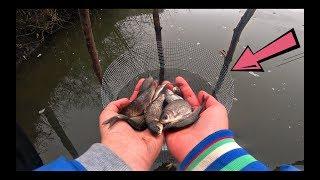 КАК СОХРАНИТЬ ЖИВЦА ДЛЯ РЫБАЛКИ НА ВСЮ ЗИМУ Рыбалка