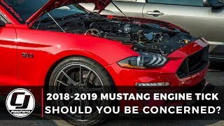 2018-2019 Mustang Tick: Should You Be Concerned?