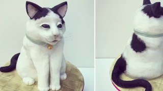 3d Cat Cake - How to make a Cat Cake