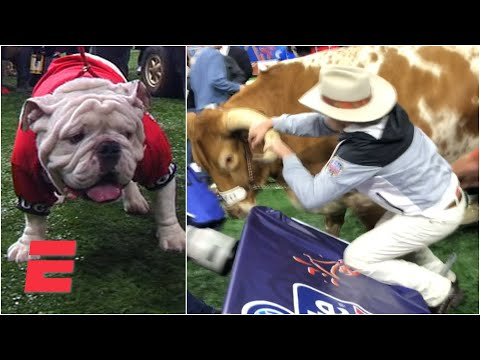 Bevo charges Uga at 2019 Sugar Bowl | College Football Highlights