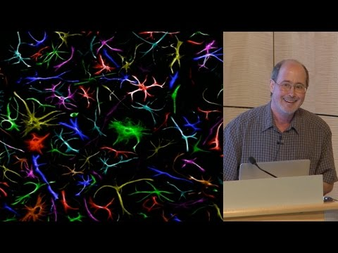 Ben Barres (Stanford) 1: What do reactive astrocytes do?