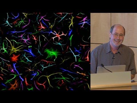 Ben Barres (Stanford) 1: What do reactive astrocytes do?