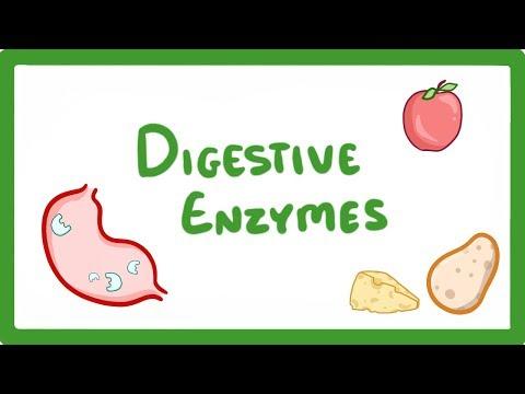 GCSE Biology Digestive Enzymes #14