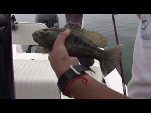 Black Bass in Tampa Florida with The Fisherman's Guide Season 2 Episode 8