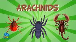 Arachnids | Educational Video for Kids