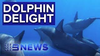 World First Wild Dolphin Swim In Australia | Nine News Australia