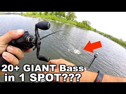 Best day EVER Fishing Swimbaits - 20+ GIANT Bass in 1 SPOT!!!