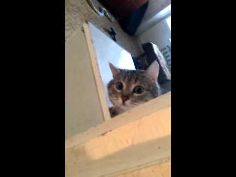 подглядел за котом