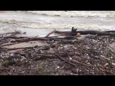 Loch Ness monster in Lake Erie? VIDEO