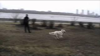Obedience 1 избранное - молодые собаки 17/12/2011