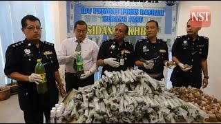 14 nabbed, 110 kg ketum leaves seized