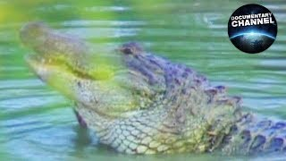 JAK DŁUGO ŻYJĄ ALIGATORY? | kiedy aligator atakuje? | Przyroda w pigułce | film dokumentalny