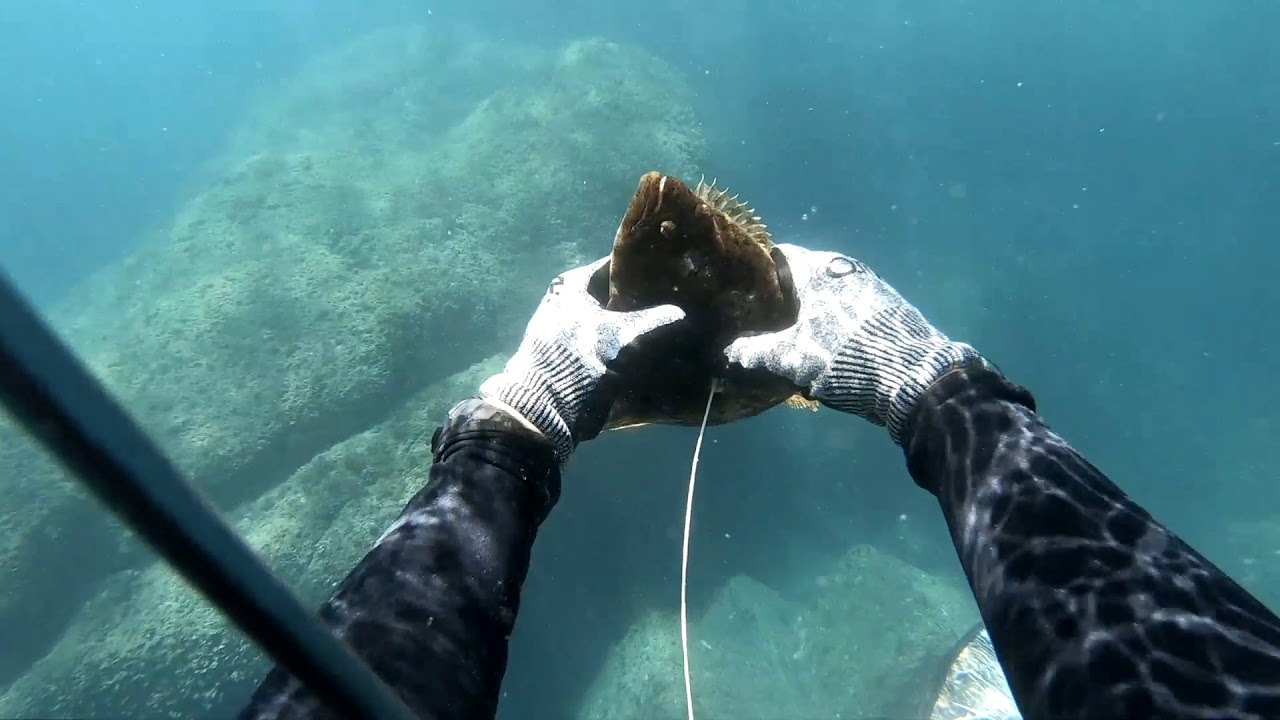 Spearfishing laws okinawa Stars and