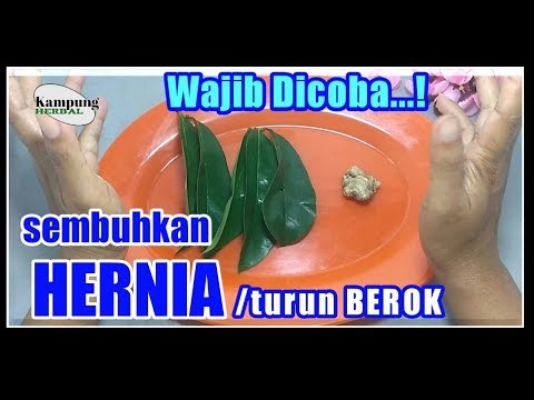 obat-herbal-hernia-paling-ampuh,-hernia-/-turun-berok-sembuh-tanpa-operasi-||-kampung-herbal