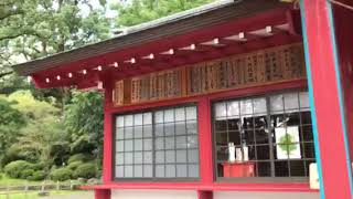 日本一の大楠が御神木 蒲生八幡神社 鹿児島 thumbnail