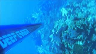 Spearfishing - SeaDevil vs Mojo