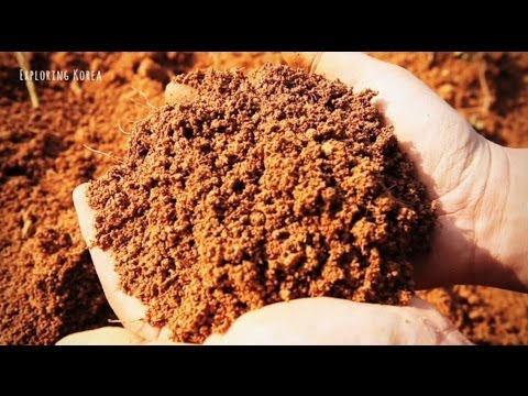 Korean soil - Hwangto (Fertile earth) 무안 황토