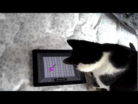 Ipad game for cats doesn't trick smart cat / Jogo de Ipad para gato não engana gatinha esperta