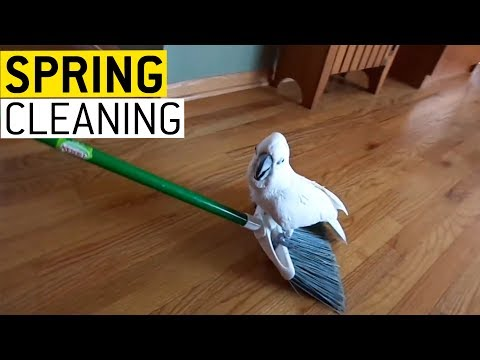 Spring Cleaning || JukinVideo