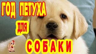 ГОД ПЕТУХА ДЛЯ СОБАКИ. ГОРОСКОП 2017 СОБАКА.