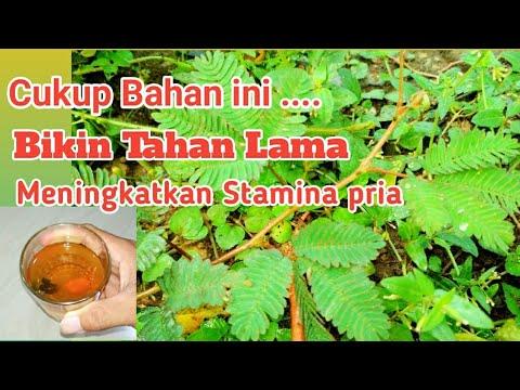 Lemah Syahwat boleh coba!!??Obat kuat alami daun putri malu dan bawang putih