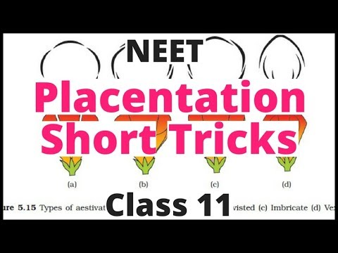 Morphology Of Flowering Plants-Placentation Short Tricks|Ncert Biology NEET|AIIMS|JIPMER|Class 11