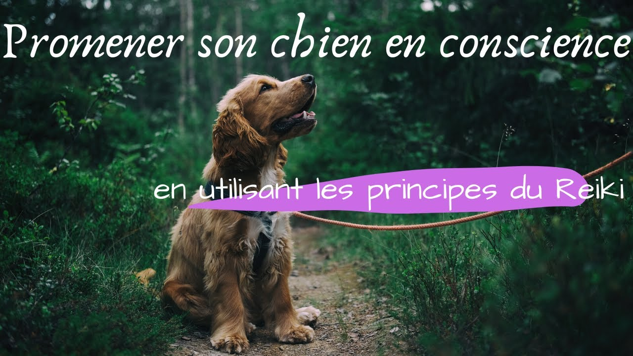 promener son chien en conscience avec les principes du reiki