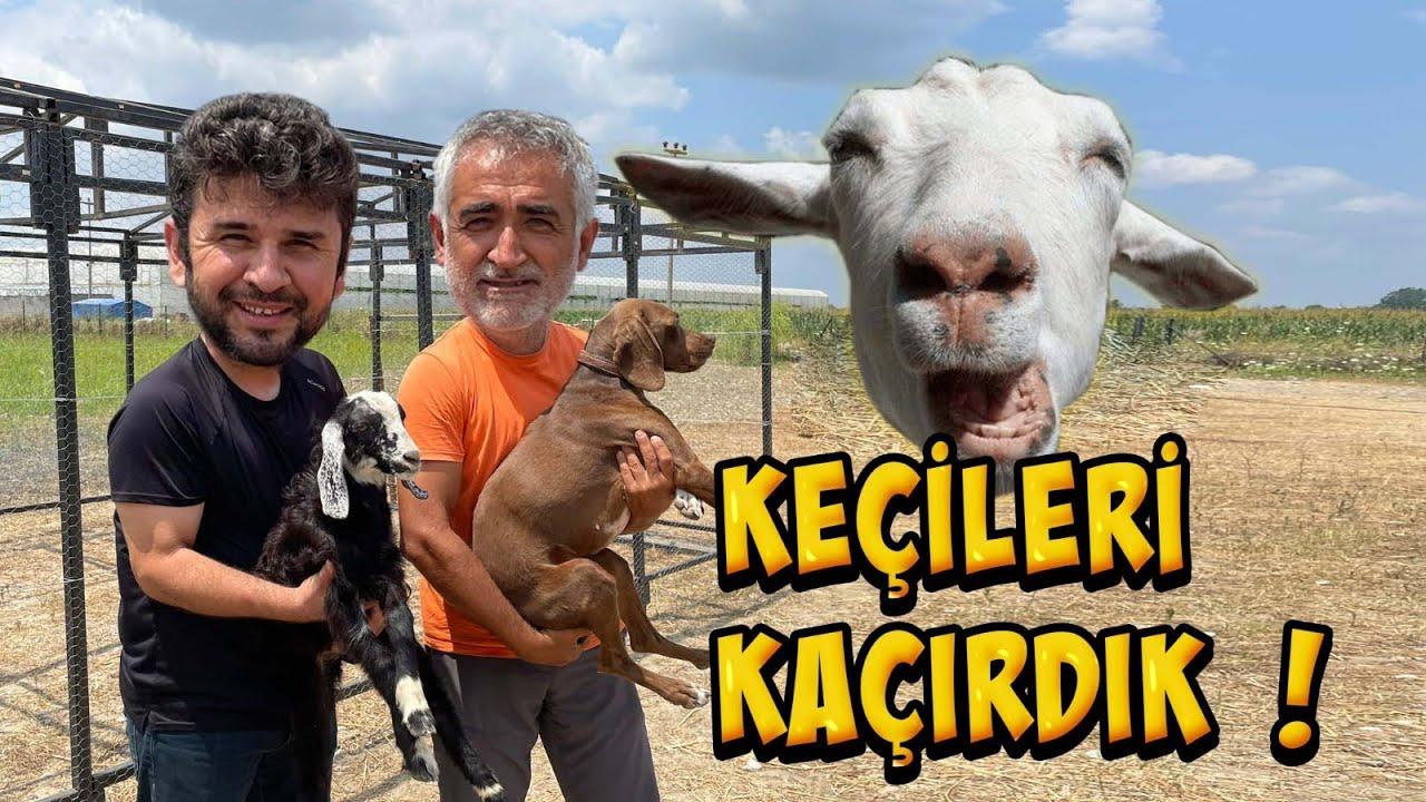 Halil Hoca Keçileri Kaçırmış Çiftlikte Son Değişiklikler