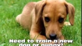 Potty Training A Puppy