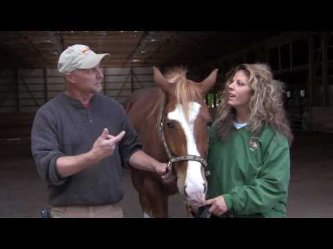Customer Testimonial for The Barn Yard & Great Country Garages - The Seivers