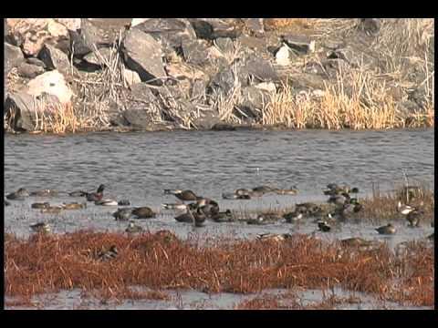 Discover the Lower Klamath National Wildlife Refuge