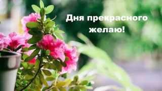 Красивое Позитивное видео Пожелание доброго, прекрасного дня Добрый День!