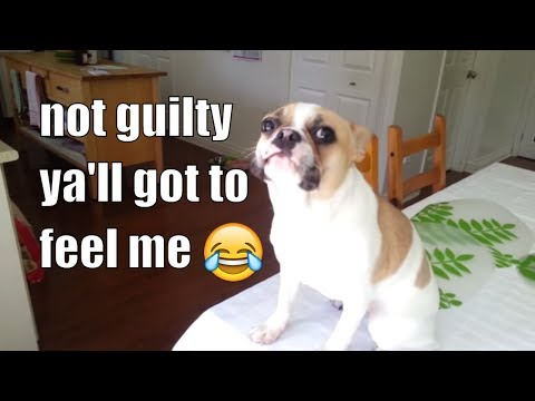 7 Guilty Dogs, Pt. 1   Try Not To Laugh #thatpetlife