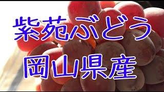 http://556.jp/SHOP/111689/1033527/list.html 電話 0235-22-2089 担当 ...