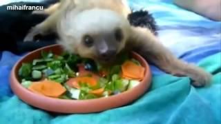 Прикольные животные видео смотреть онлайн бесплатно