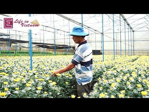 Da Lat flower farmers bank on Tet sales| VnExpress International