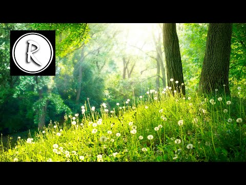 9 HOURS of Relaxing music - Meditation,Sleep,Spa,Study,Reiki