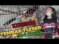 Mewah Kingdom Tembak Tleser Juri Cantik  Mp3 - Mp4 Download