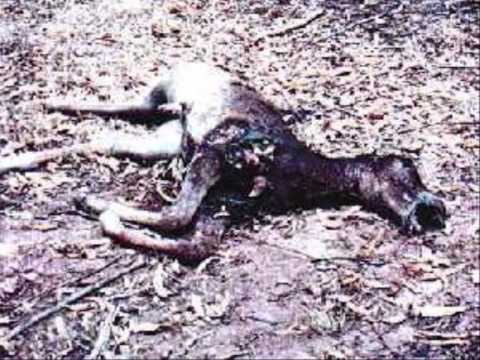 All The Wild Horses. WARNING Some Graphic Images.wmv