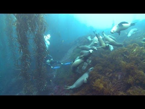 Nautilus Explorer in San Benito - Tauchreisen von Tauchertraum