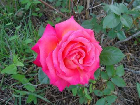 Релакс - Цветы - фотографии Натальи Хегай