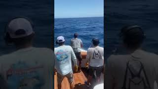 2020 Bisbee's East Cape Offshore | Hooray  | Sailfish