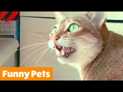 Silly Cute Animals | Funny Pet Videos