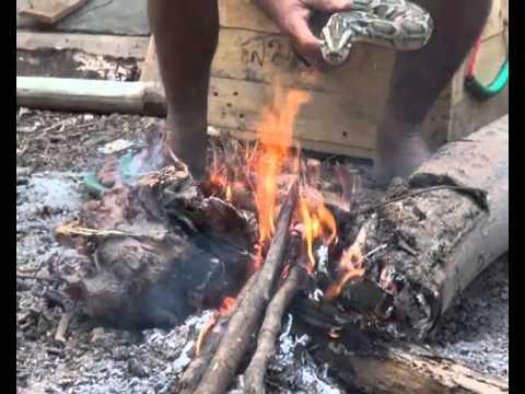 งูจงอางผิงไฟแก้หนาว