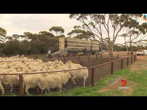 Channel 7 Perth: Nat Fyfe Farm by Ryan Daniels 11/06/2013
