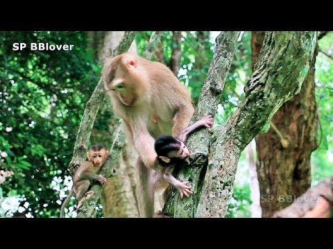 Bonita Drag Baby Monkey So Hard From Mom - SP 14