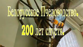Спб.Этнографический музей.Белорусское пчеловодство.Два века назад.