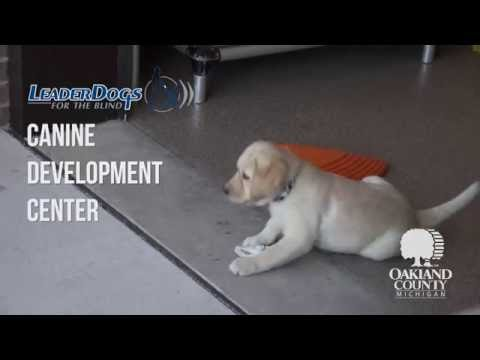 Leader Dog Canine Development Center