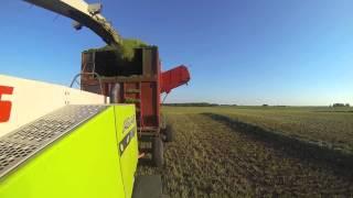 Alfalfa Silage 2013 - Dairy Farming in Canada